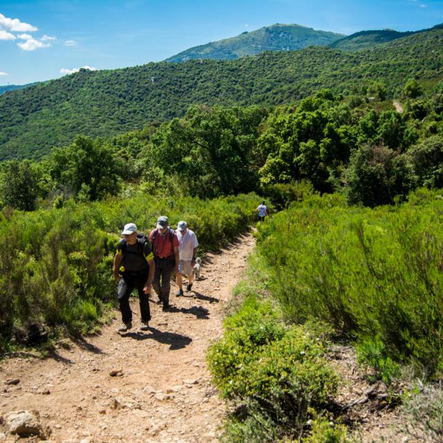 Trail Valmy Argeles S.ferrer (21)