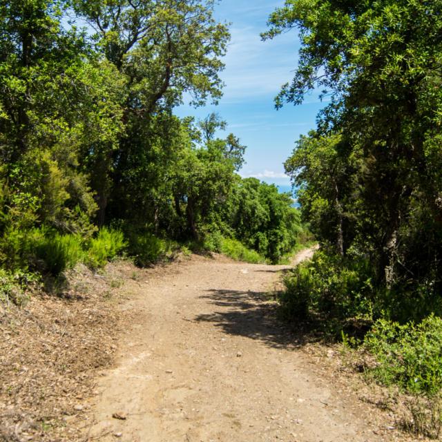 Trail Valmy Argeles S.ferrer (30)